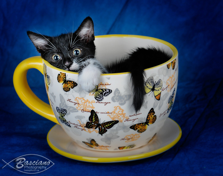Cup of Kitten.