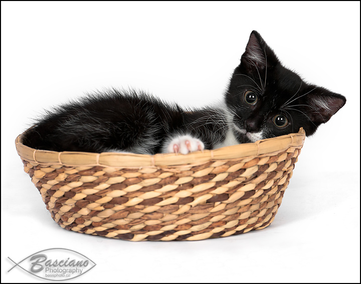 Basket Of Kitten.