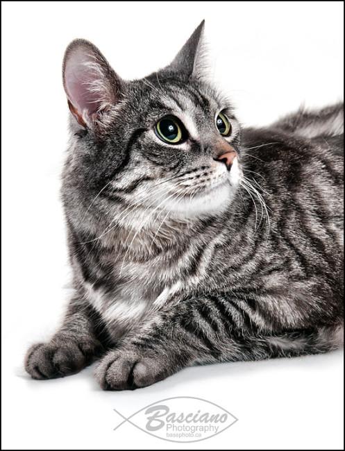 Classic Girl Cat